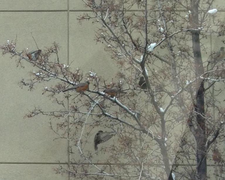 birdsintrees2